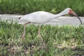 White bird on grass — Stock Photo