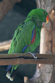Ara macaw parrot on its perch — Stock Photo