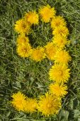 Number nine designed with dandelion on the lawn — Стоковое фото