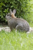 Rabbit in the woods — Stock Photo