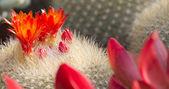 Saftiga växter — Stockfoto