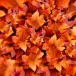 Autumn Leaves. Fall Background. Color Explosion — Stock Photo #54277615