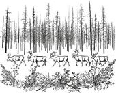 Deer in the northern taiga. — Stock Vector