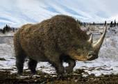 Woolly Rhinoceros — Stock Photo