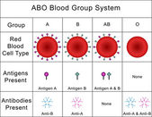 ABO Blood Group System — Stock Photo