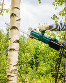 Man cut away fresh birch against the sky — Stock Photo