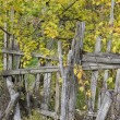 Old wooden fence on a background of yellow foliage — Stock Photo #55440107