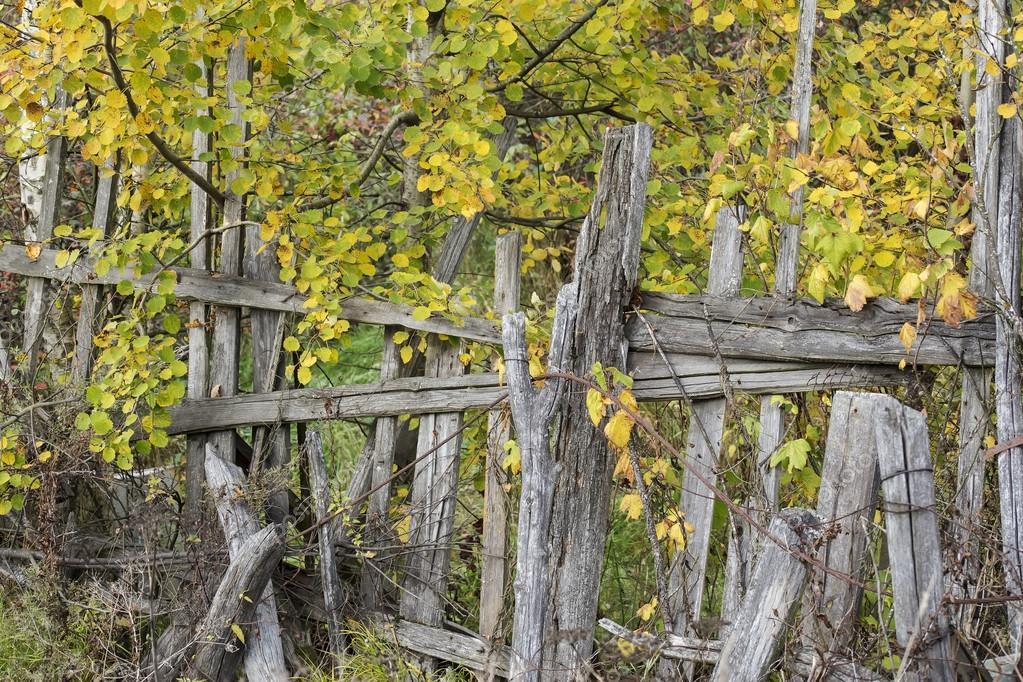 오래 된 나무 울타리 노란색 단풍 배경 — 스톡 사진 © akoldunov ...