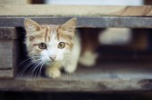 Frightened, watchful domestic cat. Cat is waiting for — Stock Photo