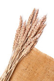 Sackcloth and wheat  — Stock Photo