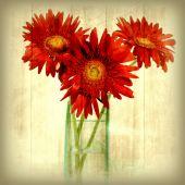 Gerbera bouquet — Stock Photo