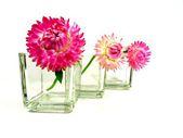 Straw flowers — Stock Photo
