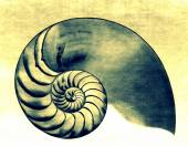 Nautilus II — Stock Photo