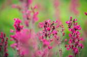 Beautiful purple Flower — Stock Photo