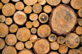 Nice wooden logs — Stock Photo