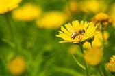 Fleur jaune avec de l'herbe verte — Photo
