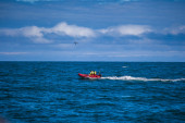 Whale watching offshore — Stock Photo