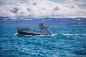 Whale watching boat — Stockfoto