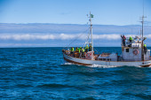 Whale watching boat — Stock Photo
