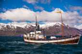 Whale watching boat — Stock fotografie