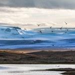 Migrating flock of birds — Stock Photo #52179339