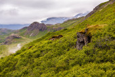 Lush green mountain scenery — Stock Photo