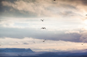 Migrating flock of birds — Stock Photo