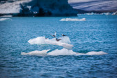 Birds perched on an iceberg — Stockfoto