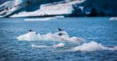 Birds perched on an iceberg — Stockfoto
