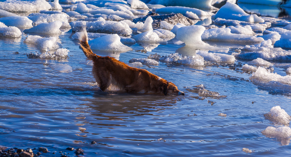 Dog paddling through icy water — Stock Photo