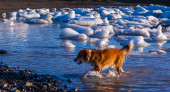 Dog paddling through icy water — Foto Stock