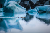 Large floating blue icebergs — Stok fotoğraf