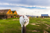 Cat balanced on a wooden pole — Stock Photo