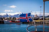 Icelandic flag flying — Photo