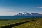 Coastal pastures in Iceland — Stock Photo