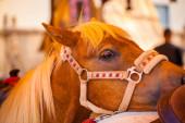 Head of a pony — Stock Photo