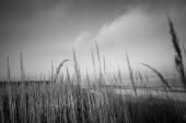 Reeds — Stock fotografie