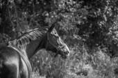 Horse wearing a halter — Stock Photo