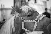 Head of a pony — Stockfoto