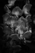 Purple blossoms — Stock Photo