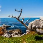 ������, ������: Pescadero Point at 17 Mile Drive in Big Sur California