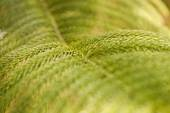 Green prickly branches of a fur-tree or pine background. — Stock Photo