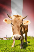 Cow with flag on background series - Peru — Stock Photo