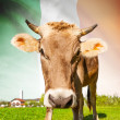 Cow with flag on background series - Ireland — Stock Photo #55934679