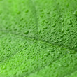 Green leaf with drops of water over it — Stock Photo #76390489
