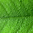 Green leaf with water drops over it — Stock Photo #76390519