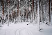 Winter forest of pine — Stock Photo