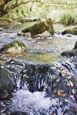 Río — Foto de Stock