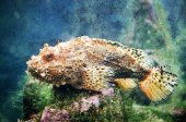 Scorpion fish — Stockfoto