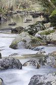 Córrego na floresta — Fotografia Stock